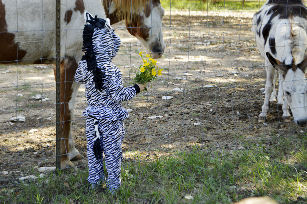 DIY zebra costume from The Nesting Spot