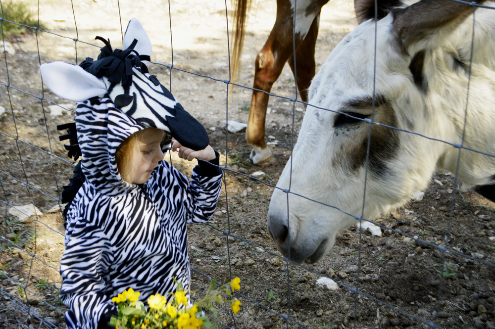 DIY zebra halloween costume