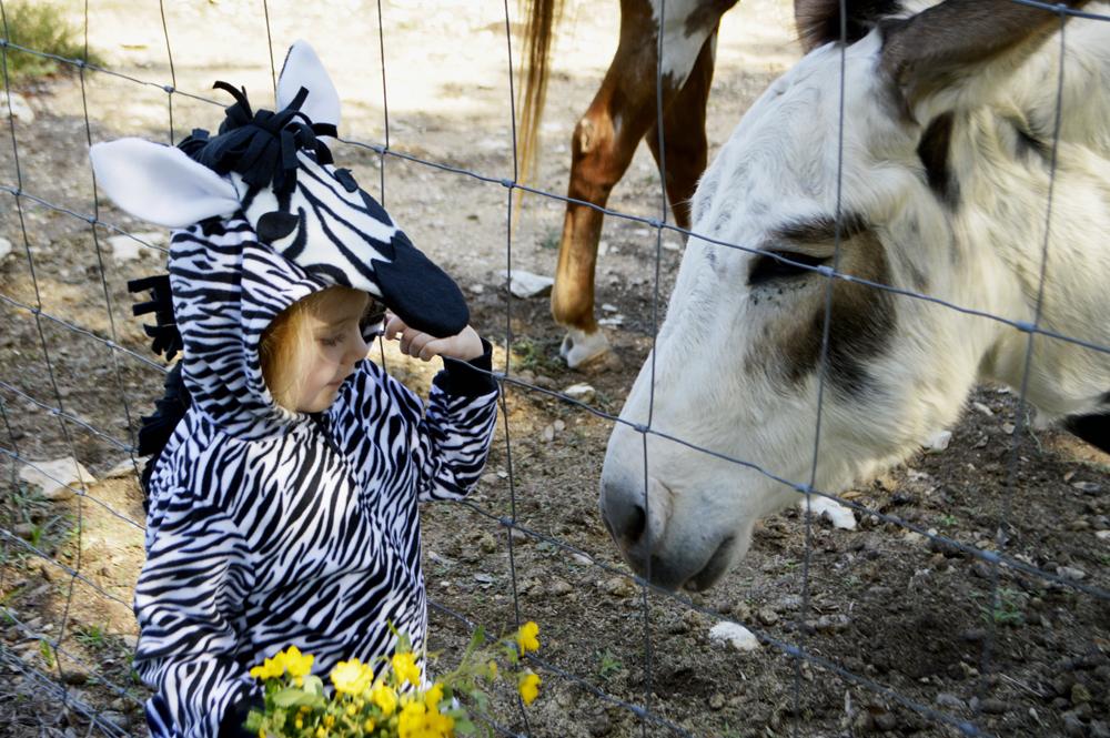 DIY zebra halloween costume