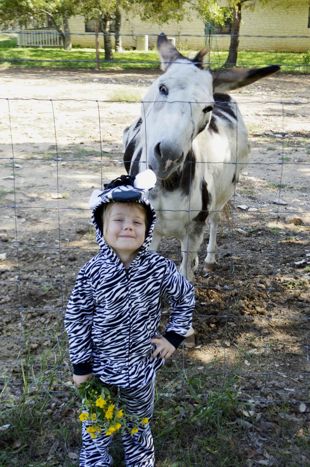 zebra out take