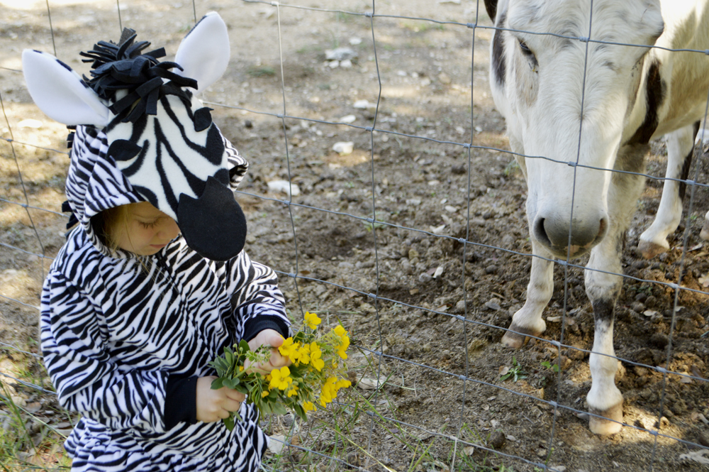 simple zebra costume